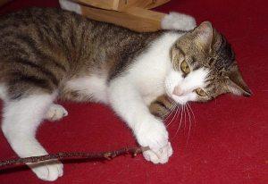 Katze Jenny wird in Hamburg-Bahrenfeld vermisst.
