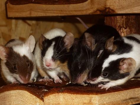 Für leckeres Nutri kommen die Mäuse gerne aus dem Häuschen.