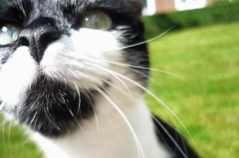 Katzenelend verhindern durch Kastration