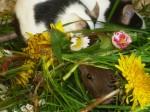Farbmaus im Gras