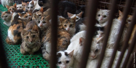 """So """"leben"""" die Katzen, deren Fell wir als Mützenbommel billig kaufen. Leiden für die """"Kunstpelz""""-Industrie - Foto von Animals' Liberty (www.kunstpelz-ist-echt.de)"""