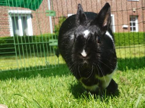 Kaninchengehoppel im Freilauf