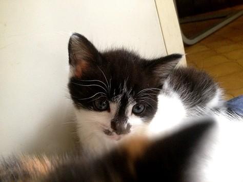 """Kätzchen Mia wartet auf """"ihren"""" Menschan"""