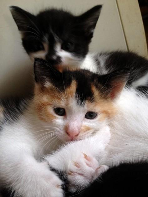 Die Katzenbabys Mia und Molly möchten zusammen bleiben