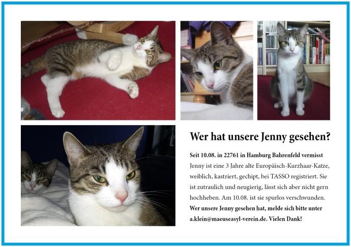 Katze Jenny vermisst in Hamburg-Bahrenfeld