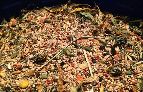 Basisfutter für Farbmäuse: Hirse, Gerste, Grassamen, andere Kleinsaaten und grüne Leckereien wie Gräser und Blüten.