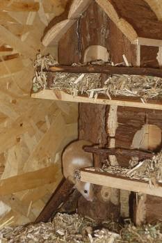Farbmäuse lieben Inventar aus Holz.