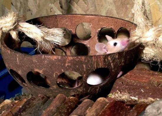 Eine Kokosschale mit Löchern - perfekt für Kletterabenteuer.