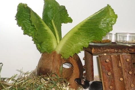 Ein Kokosnuss-Salathaus ist spannendes Erlebnisfutter.