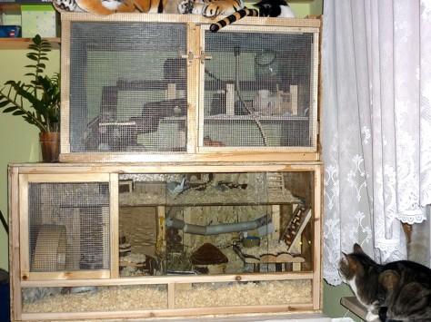Katzensicheres Farbmausgehege: doppelt verdrahtet, Türen ein- und ausbruchsicher verschlossen.