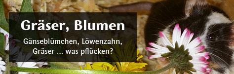Gräser und Blumen für Farbmäuse