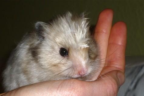 Hamster möchten nicht angefasst werden.