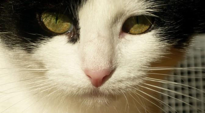 Katzensichere Farbmaushaltung